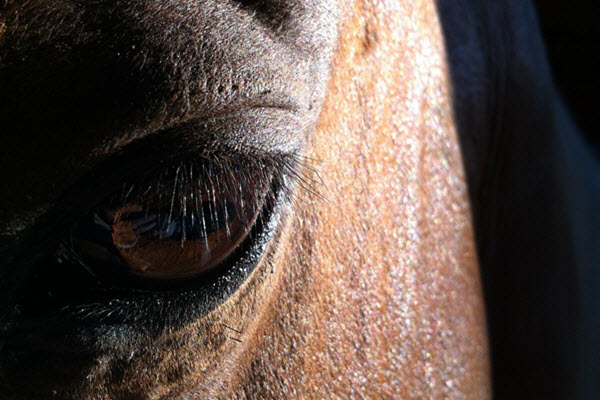 focus-horse-aromatherapy-blend-image