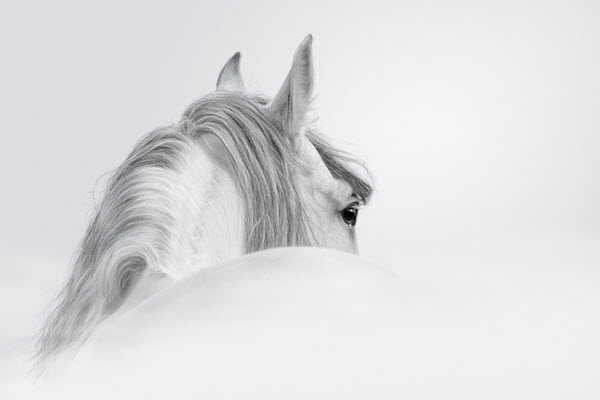 calm-horse-aromatherapy-blend-image